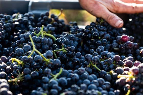 buy-vintage-hospices-wine