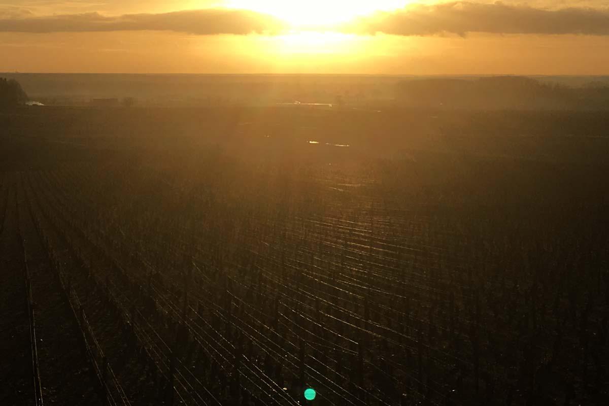 automne-vignoble-vin-hospices-encheres