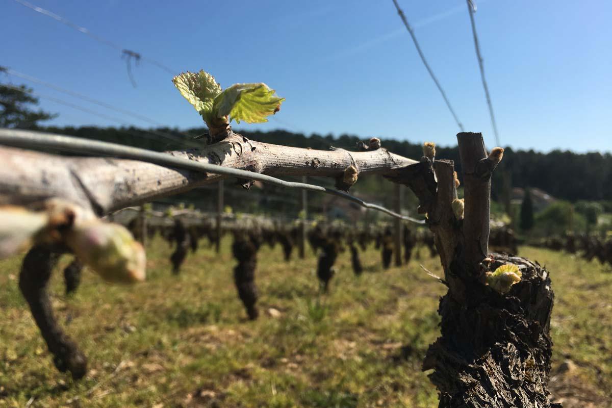 WineEnthusiast : de superbes notes pour les vins du millésime 2018 aux Domaines Albert Bichot