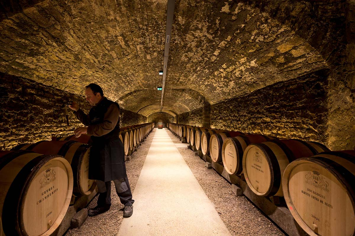 Ageing the 2019 vintage wines at Domaines Albert Bichot